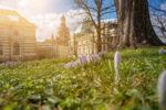 Frühling im Detail für Fotografen